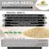 Quinoa Seed White