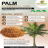 Palm Powder Sugar